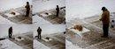 snowshoveldog